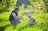 Jochen Schweizer Geschenkgutschein: Wandern mit Huskies
