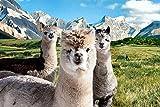JOCHEN SCHWEIZER Geschenkgutschein: Alpaka Wanderung für 2 Personen