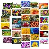 32 Grußkarten bunte Blumen Klappkarten mit 32 Umschlägen Blumen & Garten…