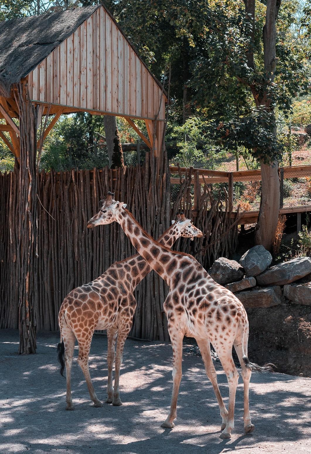 Gutscheinvorlage Zoo