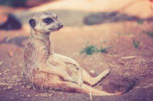 Zoo Gutscheine
