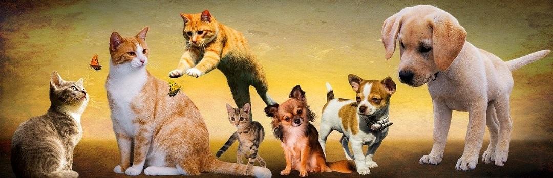 Grusskarten Tiere