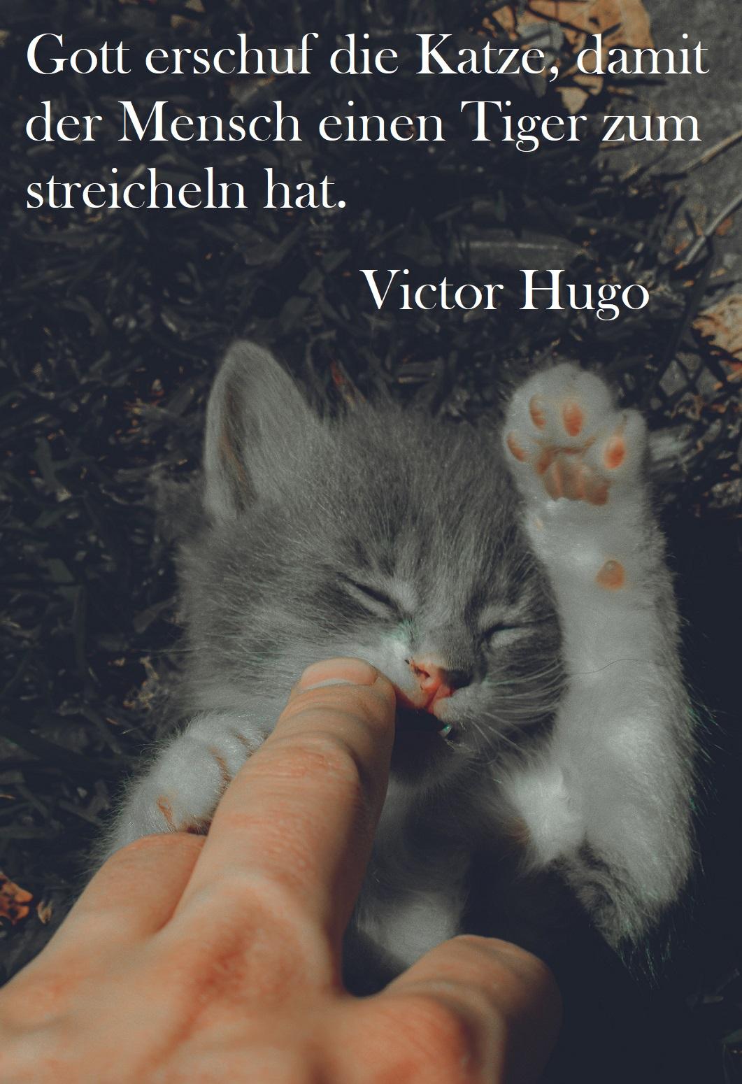 Spruch über Katzen