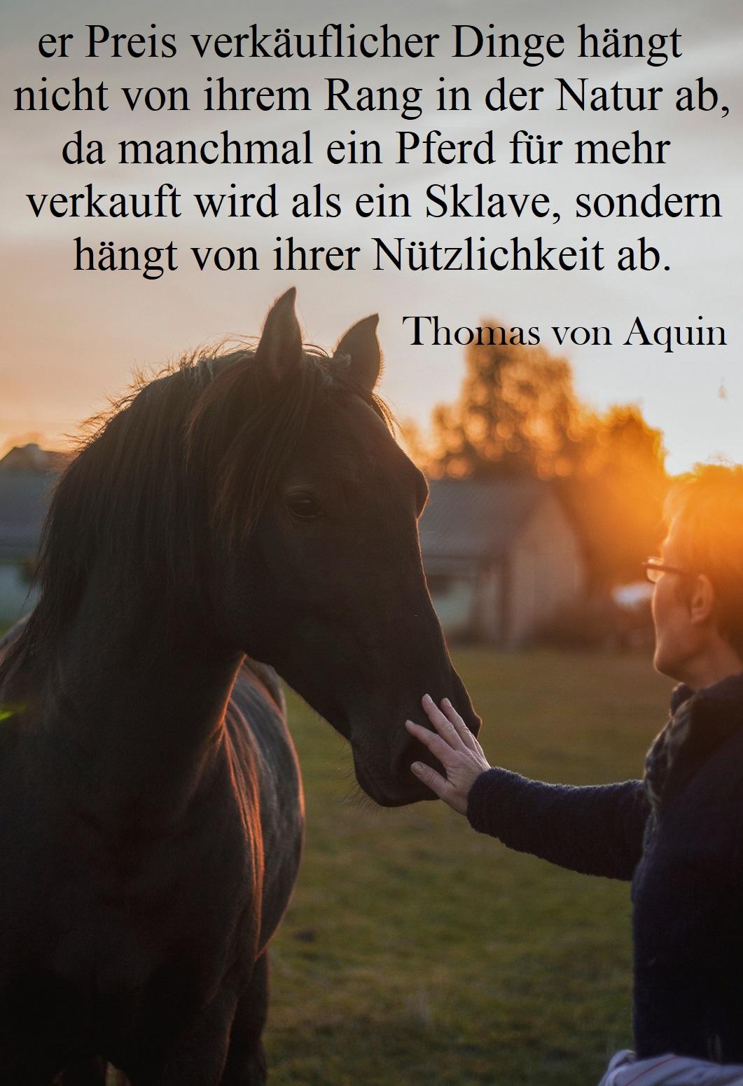 Pferde status sprüche Pferdesprüche für