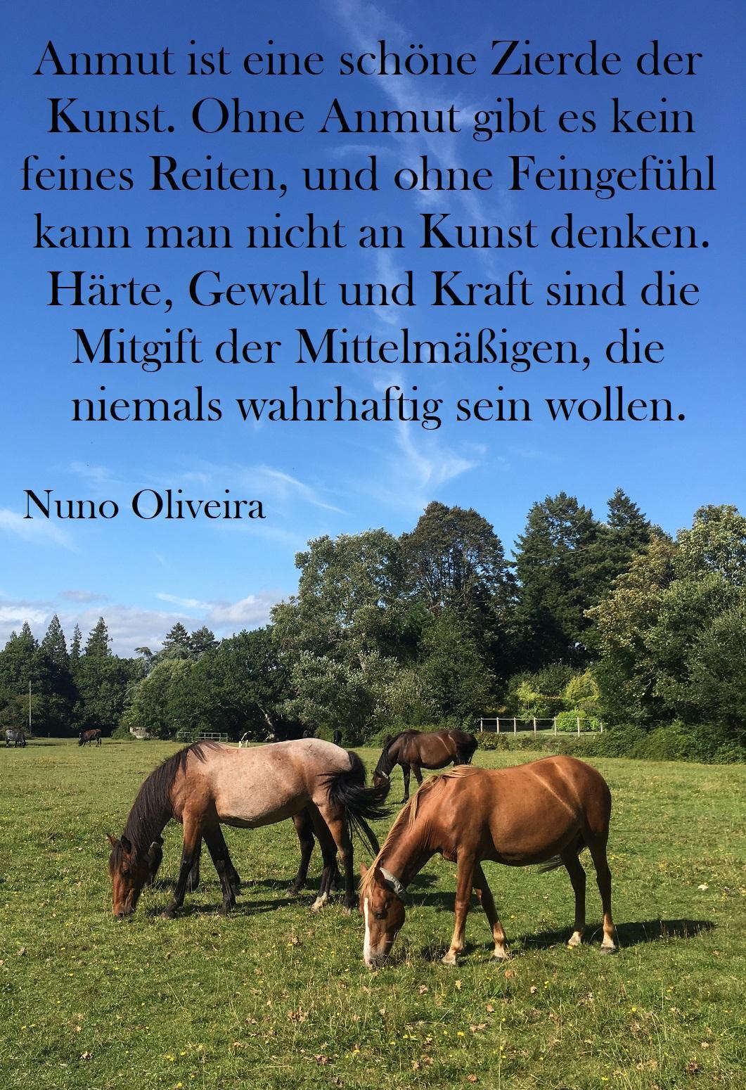Spruch über Pferde
