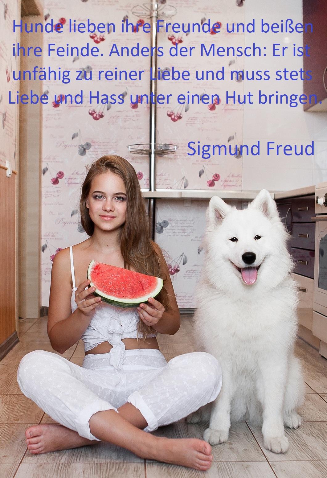 Spruch über Hunde